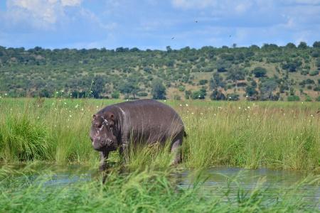 Croisière L'Afrique Australe : Expérience inédite aux confins du monde - 4