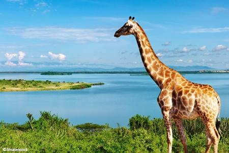 L'Afrique Australe: Expérience inédite aux confins du monde - voyage  - sejour