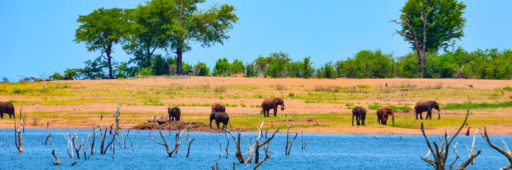 Safari matusadona en Afrique