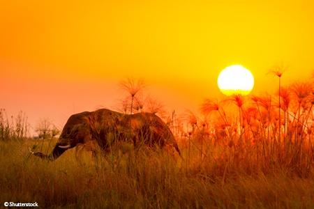 L'Afrique Australe: Expérience inédite aux confins du monde avec pré-programme au Cap de Bonne Espérance - voyage  - sejour