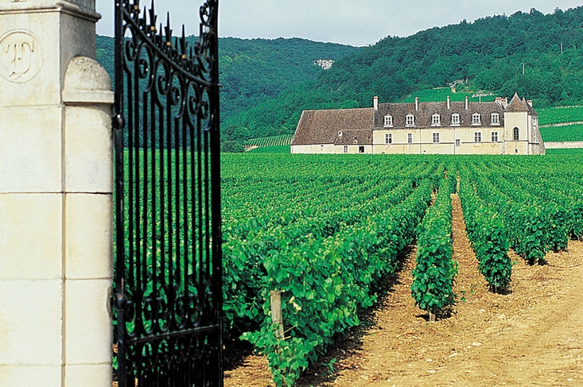 The entrance of the castle should be done by crossing the vineyards