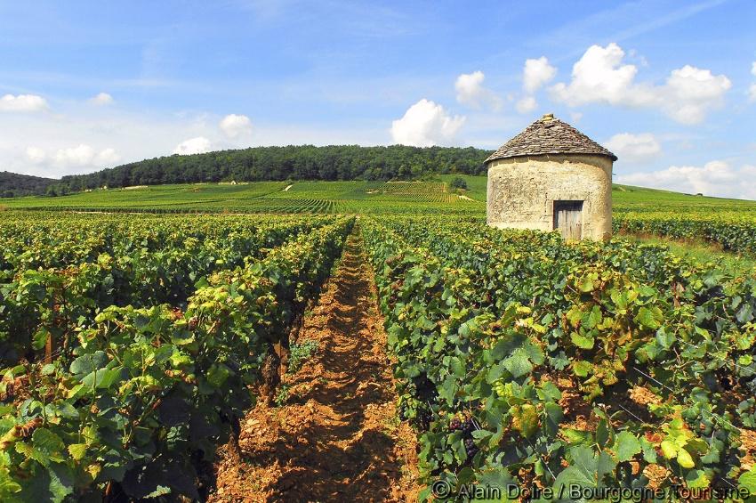 Excursion dans le vignoble bourguignon et visite des for Visite dans le 78