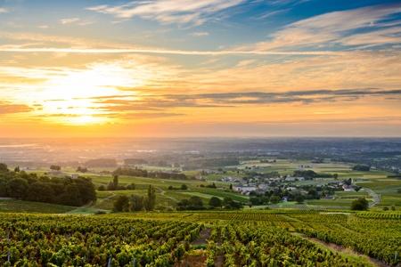 Croisière oenologique : dégustations de vins et conférences (formule port/port)