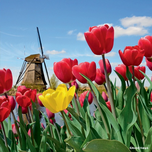 Parc floral du Keukenhof, Hollande