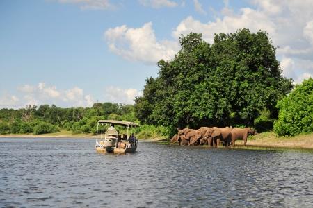 troupeau d'éléphants au parc national de Chobé