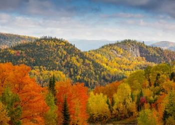 Les forêts du Canada