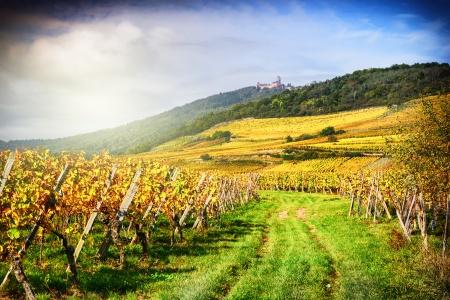 Croisière L'Alsace pittoresque et gourmande (formule port/port) - 3