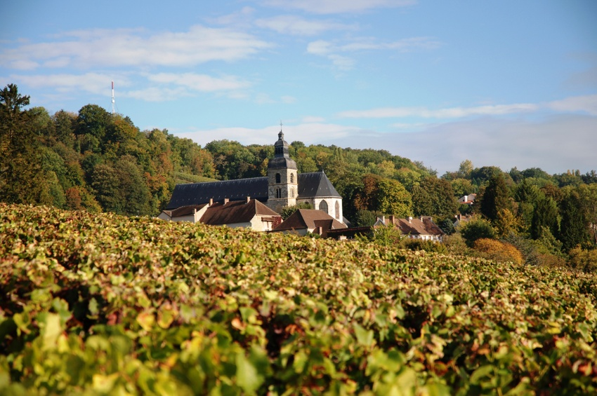 Vineyard in Hautvillers
