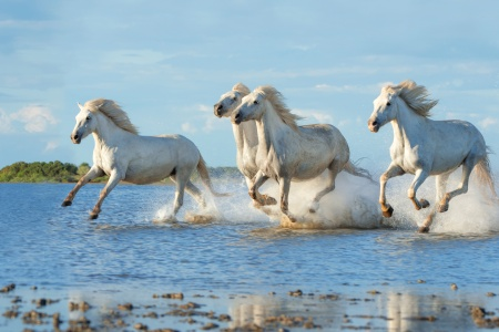Southern France and the Wild Camargue (port-to-port cruise)