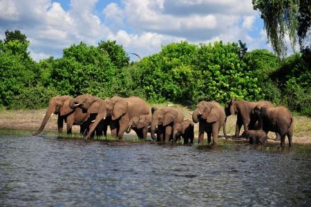 Troupeau d'éléphant en Afrique du sud