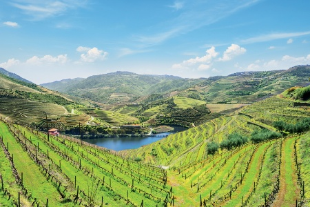 Hike in Porto, the Douro Valley (Portugal), and Salamanca (Spain) (port-to-port cruise)